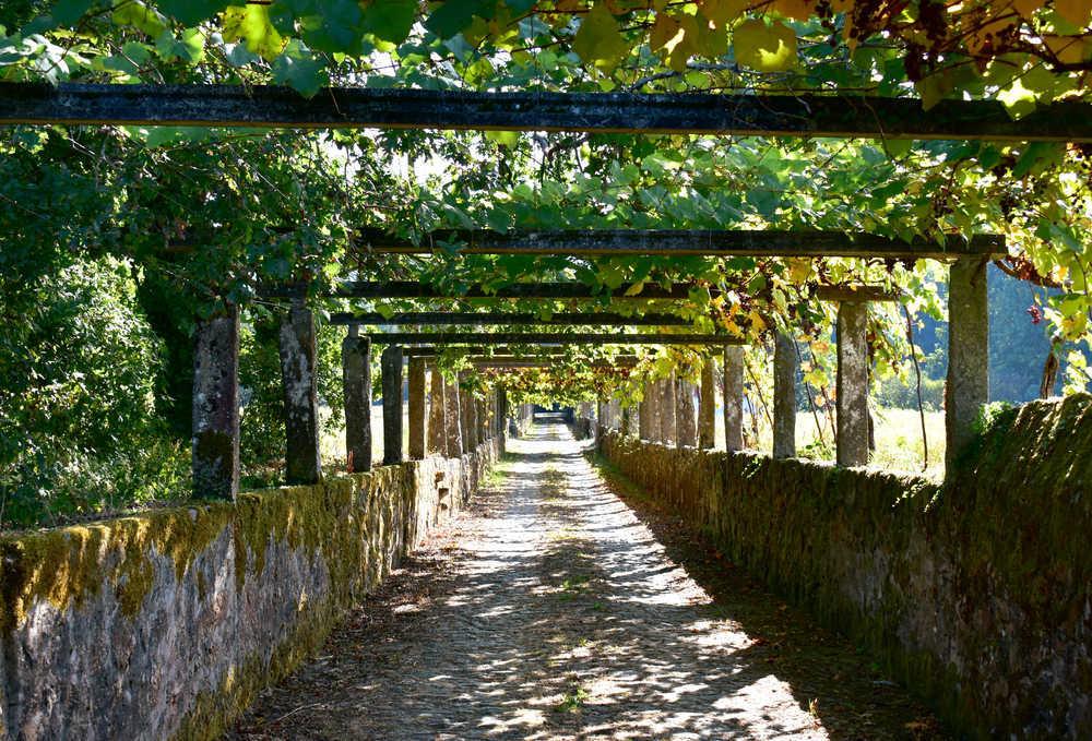 El turismo vitivinícola en las Rías Baixas